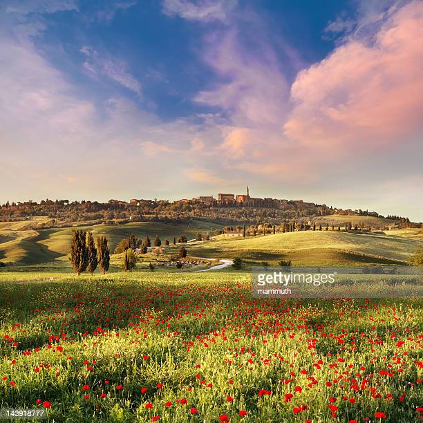 poppy field  in tuscany at sunset - tuscany stock pictures, royalty-free photos & images