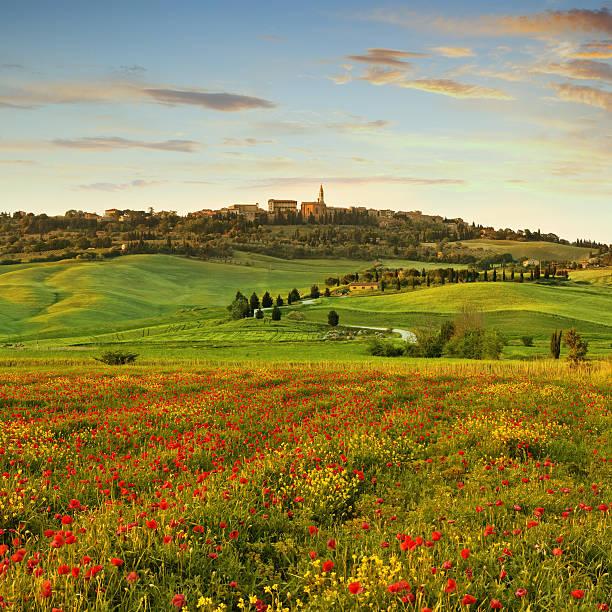 Poppy Field  In Tuscany At Sunset Wall Art