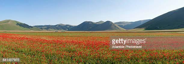 poppy fields in castelluccio di norcia - castelluccio di norcia foto e immagini stock