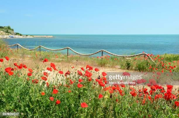 Poppy garden nearby the coast of Black Sea
