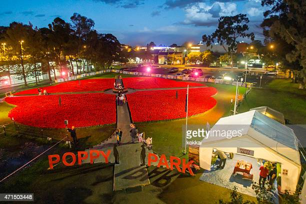 poppy park in penrith - anzac poppy stock pictures, royalty-free photos & images