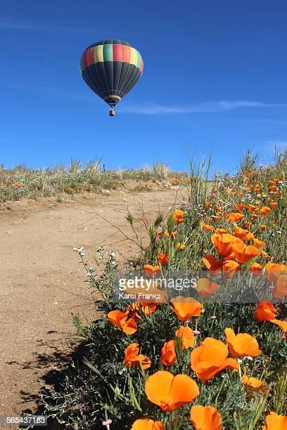 Poppy path with hot air balloon