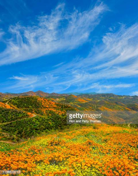 poppy super bloom at walker canyon lake elsinore, ca (p) - lake elsinore stock photos and pictures