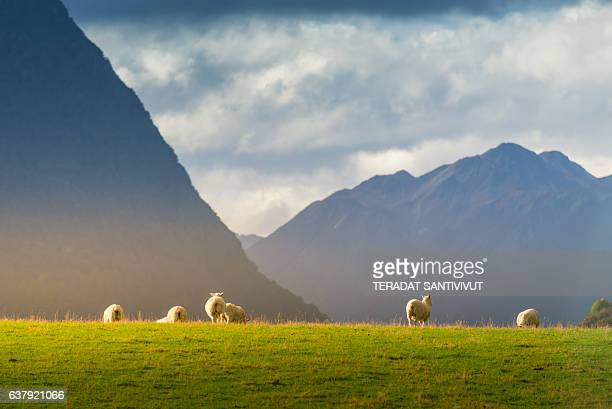 popular view of south island new zealand - queenstown stock pictures, royalty-free photos & images