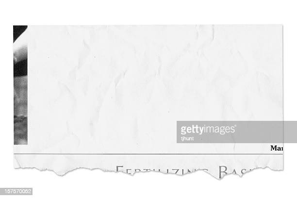 Populated newspaper tear isolated on white