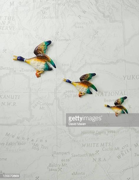 Porcelain flying ducks on map wallpaper