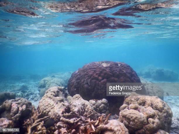 Porites Coral Formation