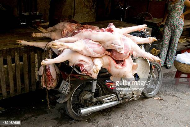CONTENT] pork a number of full bodies being delivered on top of a small motor scooter to a market in Haiphong Vietnam