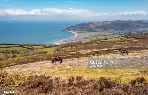 波洛克公共 - 埃克莫爾國家公園 - 英格蘭 - exmoor national park 個照片及圖片檔