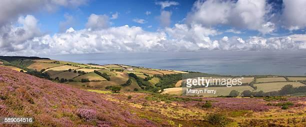 porlock common panorama - exmoor national park - fotografias e filmes do acervo