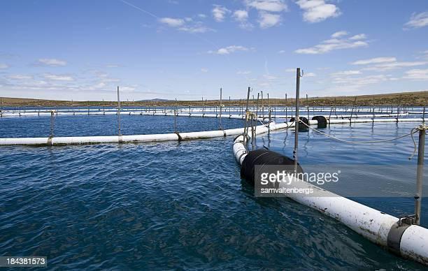 Port Lincoln Aquaculture