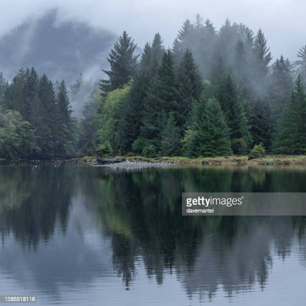 port renfrew foggy landscape - vancouver island stock pictures, royalty-free photos & images