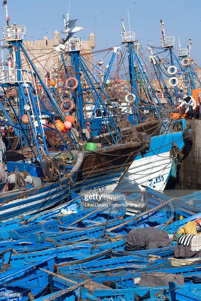 Port with fishing boats, Essaouira, Morocco, North Africa, Africa : Stock Photo