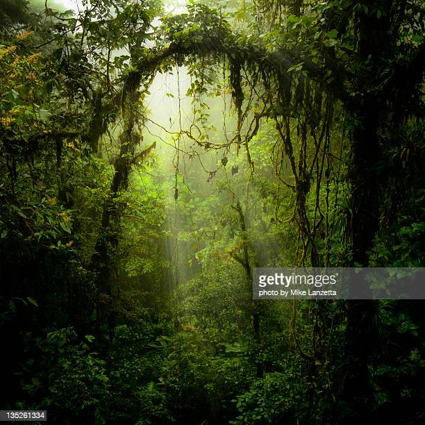 portal - tropical rainforest stock pictures, royalty-free photos & images