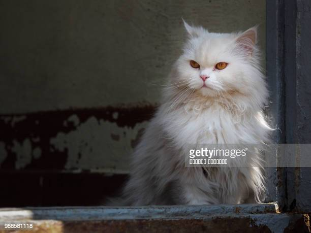 porter - persian stock photos and pictures