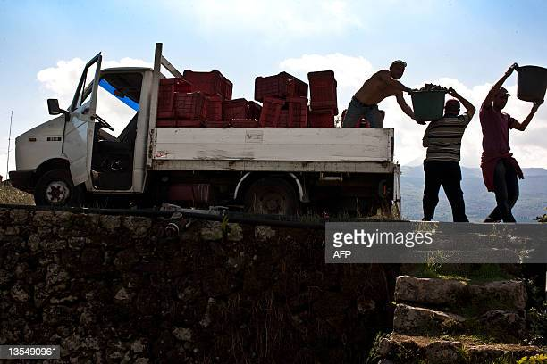 Porters haul buckets of grapes of Sicily's top wine consultant Salvo Foti in his vineyard north of Mount Etna near Linguaglossa The son and grandson...