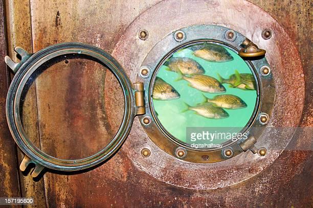 Hublot Banc de poissons
