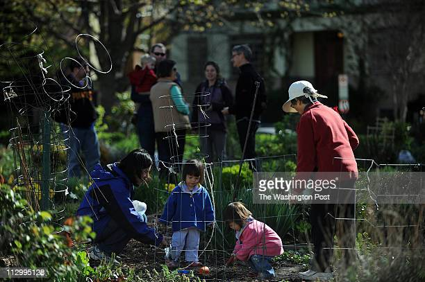 WASHINGTON D C APRIL 17 2011 Portia Wu left spends time with her two twoyearold twin daughters Aurora Wu second from right and Althea and her mother...