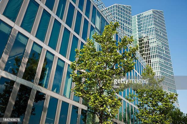 Teil von Bäumen vor Bürogebäude