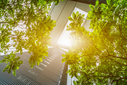 portion of trees against office buildings 626394534