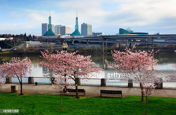 Portland Cherry Tree Waterfront.