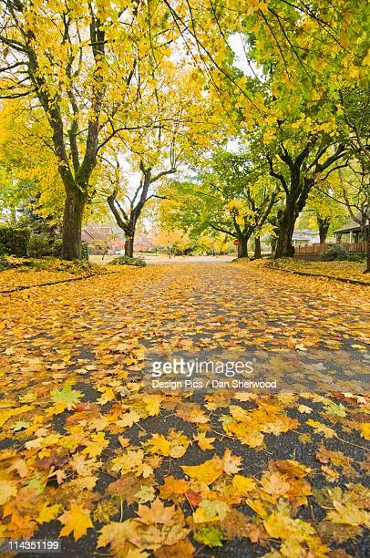portland, oregon, united states of america - dan sherwood photography stock pictures, royalty-free photos & images