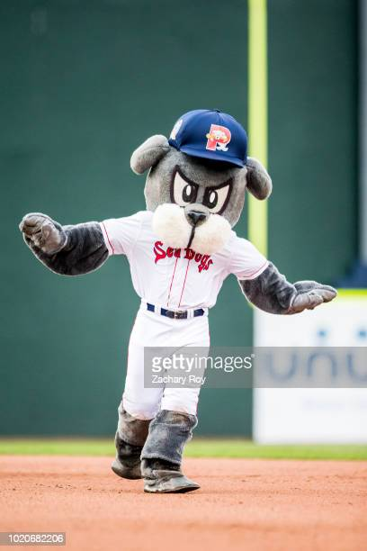 Portland Sea Dogs mascot Slugger races a young fan around the bases in a game between the Portland Sea Dogs and the Binghamton Rumble Ponies at...