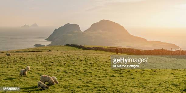 Portmagee, County Kerry, Munster province, Ireland, Europe. Panoramic view of the Puffin island and the Skellig islands from the coast at sunset.