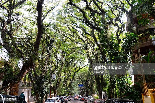 porto alegre - porto alegre stock pictures, royalty-free photos & images