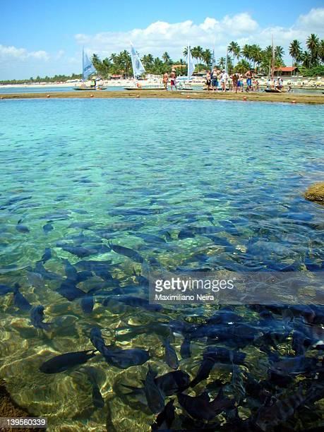 porto de galhinas in brazil - porto galinhas stock photos and pictures