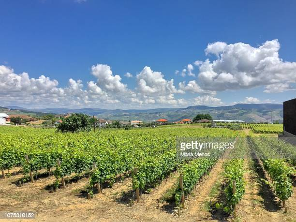 porto fields - portugal stock pictures, royalty-free photos & images