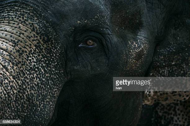 Portrait, Close-up of Elephant Head with Texture