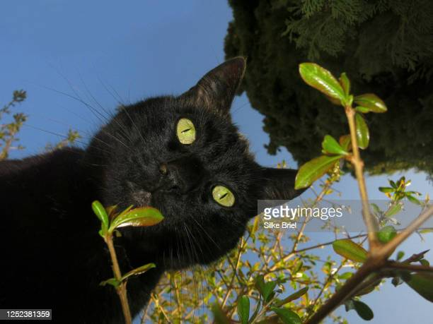 portrait curious black cat from below - briel stock pictures, royalty-free photos & images