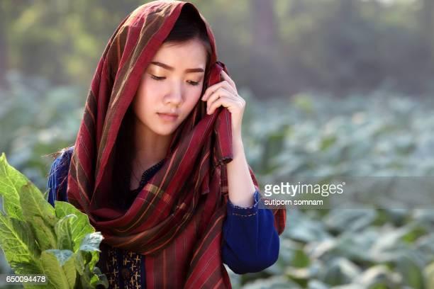 portrait lao beautiful woman tobacco field in tobacco farming - filipino farmer stock photos and pictures