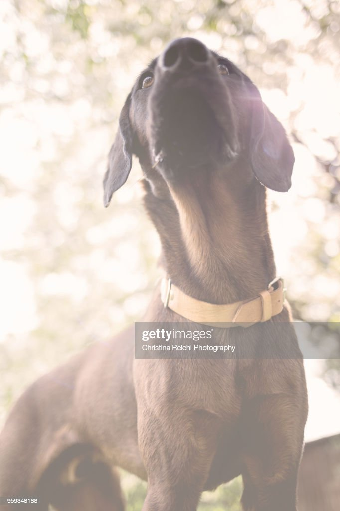 Portrait of a beautiful dog : Stock-Foto