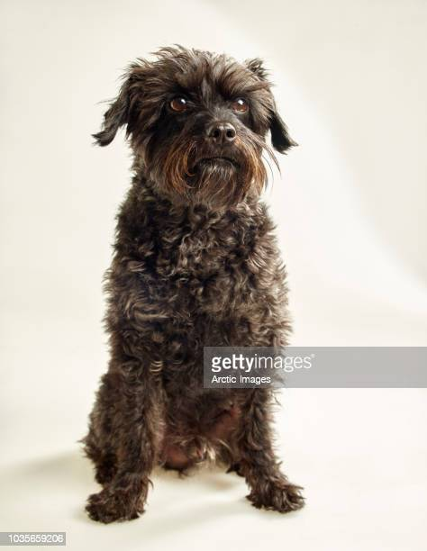 portrait of a black dog - mixed breed - mongrel dog stock pictures, royalty-free photos & images