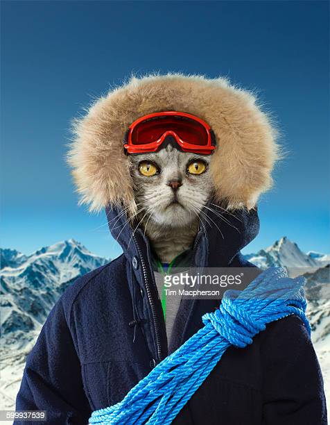 portrait of a cat dressed as an explorer - parka coat stock pictures, royalty-free photos & images
