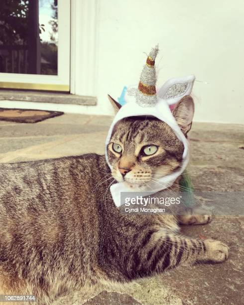 portrait of a cat dressed up for halloween - naughty halloween stock photos and pictures