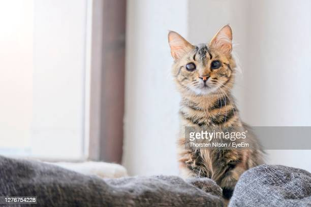 portrait of a cat looking away at home - partially sighted stock pictures, royalty-free photos & images