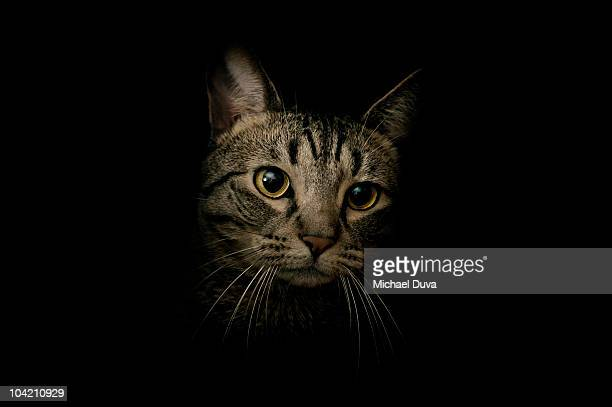portrait of a cat on black background