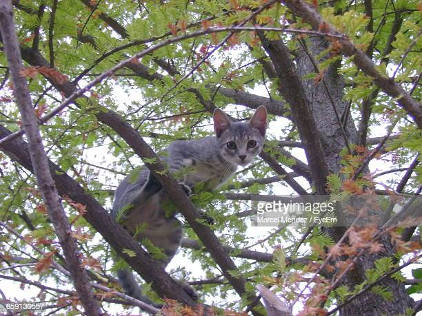 Portrait Of A Cat On Branches