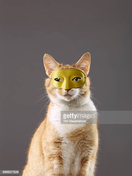 Portrait of a cat wearing a mask