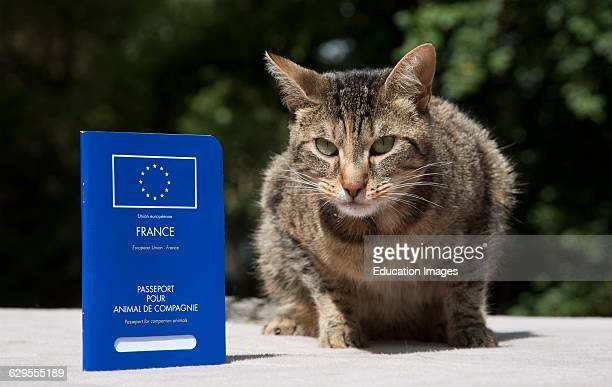 Portrait of a cat with her Pets Passport.