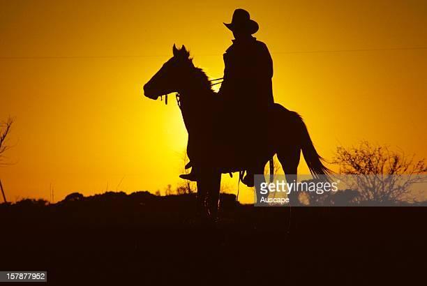Portrait of a cattle drover on horseback Australia