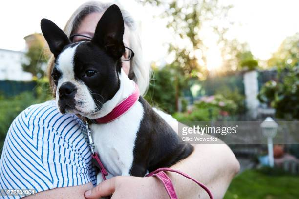 portrait of a content woman in her 50is cuddling her boston terrier puppy  dog - 1 minute 50 ストックフォトと画像