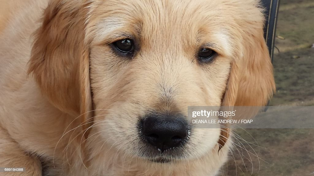 Portrait of a cute puppy : Stock Photo