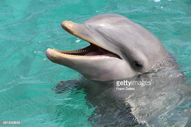 portrait of a delphin - mammal stock pictures, royalty-free photos & images
