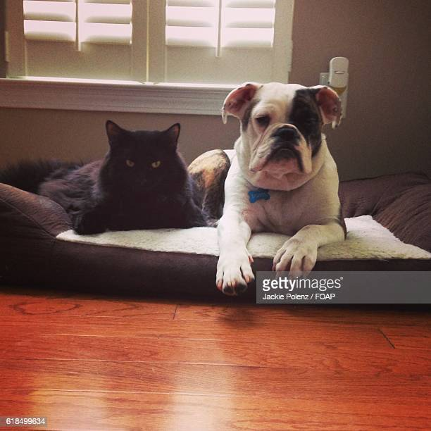Portrait of a dog and cat on pet bed