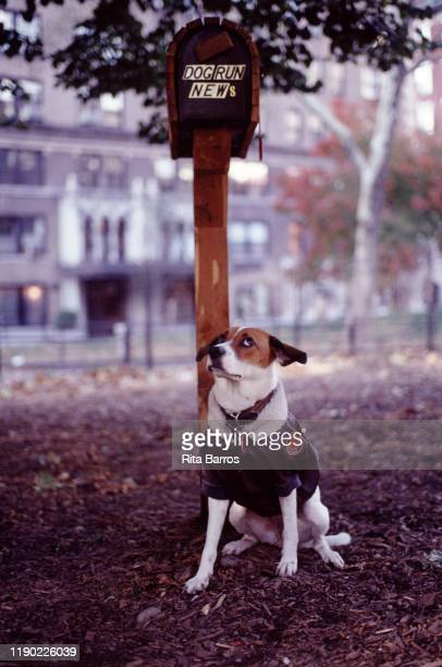 Portrait of a dog dressed in a sweater in an unidentified park New York New York 1994 The photo was taken as part of a story on canine fashions
