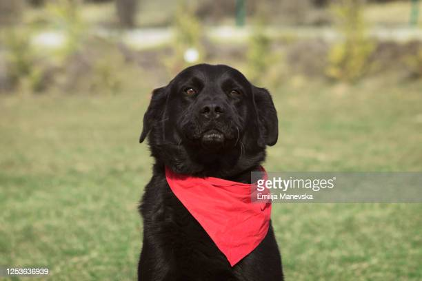 portrait of a dog for adoption - dog pound stock pictures, royalty-free photos & images